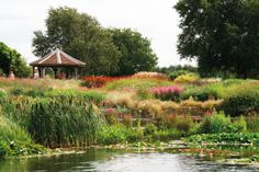 Pensthorpe Wildfowl Park and Gardens. Repinned by www.watersidenursery.co.uk #watergardens #ponds Inspirational for wildlife ideas