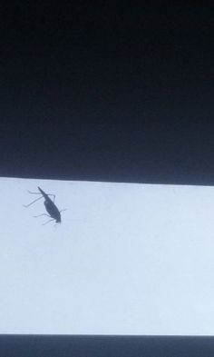 Look what I discovered on the inside of my bedroom window earlier. Why me? Guess the better question is why not me.