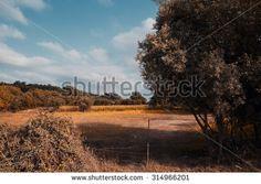 Park of Pateira de Angeja,Portugal,Europa - stock photo