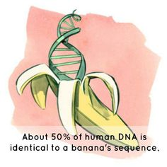 Find the DNA in a Banana: Scientific American; Extract DNA from the banana at home and other experiments! Dna Facts, Science Facts, Science Activities, Science Projects, Life Science, Science Memes, Biology Projects, Science Cartoons, Science Ideas