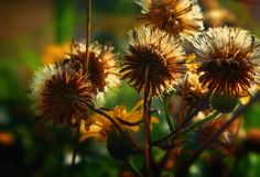 Beautiful photography Inspiration > Summer Photography by Kimma Parish   process + affect blog #summer #photography #NaturePhototgraphy #MacroPhotography #Sunset #flower #FlowerArt #FlowerPhotography #design #LongExposure #closeup #CloseUpPhotography #wildflowers #succulent #cactus