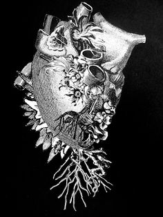 scatterheart- surreal collage anatomy art by Bedelgeuse