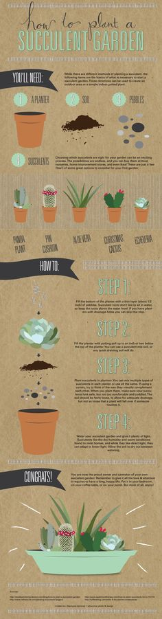 GREAT GARDENING TIPS! If your track record is truly horrible when it comes to keeping plants alive, stick to succulents. This guide will show you how to plant one. Succulent Gardening, Cacti And Succulents, Planting Succulents, Garden Plants, Gardening Tips, Planting Flowers, Succulent Wall, Plants Indoor, Succulent Ideas
