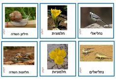 Seasons, Fall, Garden, Plants, Craft, Decor, Autumn, Garten, Decoration