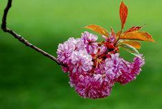Henry Miller, Plants, Nature, Flora, Plant