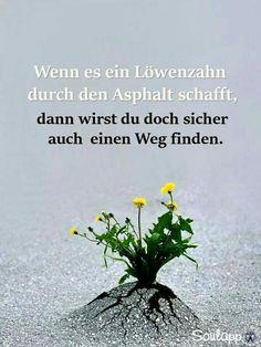 Nachhilfe Hofheim  Inspirational & Motivational Quotes & Sprüche & Sayings & Citations