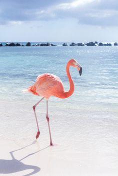 "Renaissance Aruba Resort & Casino's private ""flamingo"" island"