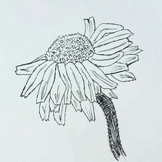 Flor pintada a tiralineas. Dibujos. Drawings