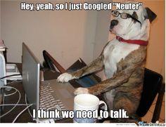 Dog Neuter