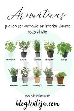 Herb Garden, Garden Plants, Indoor Plants, Container Gardening, Gardening Tips, Glass Planter, Plant Information, Different Plants, Outdoor Planters