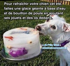 Votre chien a chaud et vous ne savez pas quoi faire ? Découvrez l'astuce ici : http://www.comment-economiser.fr/chien-qui-a-chaud-que-faire.html