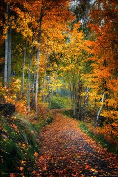Autumn Pathway by Ann Thomstad on (fall season pathways) Foto Nature, All Nature, Autumn Nature, Beautiful World, Beautiful Places, Beautiful Pictures, Winter Gif, Landscape Photography, Nature Photography