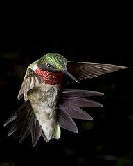 Slow Motion~ hummingbirds are amazing!!