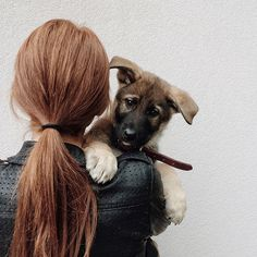 Of hearth and home Clary Fray, Baby Animals, Cute Animals, Dog Lady, Hearth And Home, Mans Best Friend, Beautiful Creatures, Dogs And Puppies, Doggies