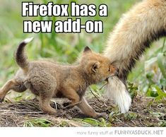 cute baby animals with captions | baby fox cub biting tail animal firefox new add on funny pics pictures ...