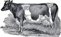 Vintage Farmhouse Image Cow--The Graphics Fairy