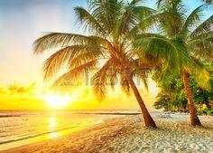 Hermosa puesta de sol sobre el mar con vistas a palmeras en la playa de arena blanca en una isla caribe�a de Barbados photo