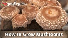How to Grow Mushrooms
