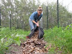 Ventajas de utilizar el acolchado en el huerto: Mulching mantillo   Plantas