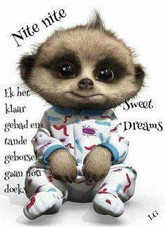 Baby oleg meerkat video, baby meerkat, types of animals, all things cute, Funny Baby Gif, Funny Babies, Cute Babies, Meerkat Video, Cute Baby Animals, Animals And Pets, Dog Pictures, Cute Pictures, Baby Meerkat