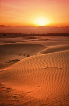 #deltadelebre Like a #desert but it's not a real one. Dunes in the Ebro Delta, Southern Catalonia.