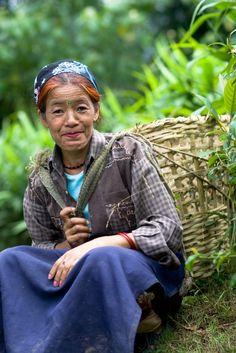Darjeeling Tea picker - Photo: Thatcher Cook for Mercy Corps Darjeeling Tea, Beauty Around The World, India People, Most Beautiful Faces, West Bengal, Fun Cup, Tea Art, Special People, Women Life