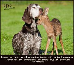 Love is not a characteristic of only humans. Love is an emotion, shared by all animals. ~ A.D. Williams