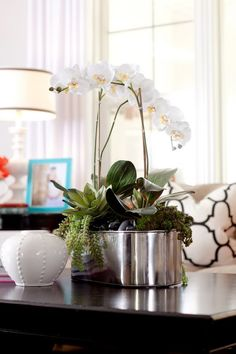 orchids and succulents - LOVE