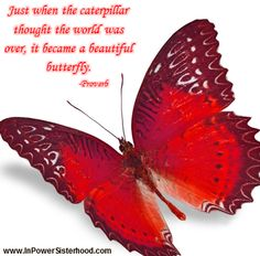 Just when the caterpillar thought the world was over, it became a beautiful butterfly.