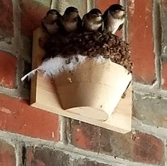 Barn Swallow Nest Cups| Wood Nesting Cup | Nest Cups for Barn Swallows – The Birdhouse Chick