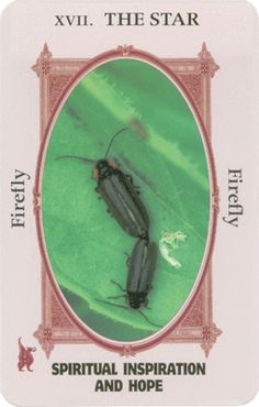 """XVII The Star - Firefly """"Spiritual Inspiration and Hope"""" The Animal-Wise Tarot Deck, by Ted Andrews, book layout and design by Diane Haugen and Whiskey Creek Document Design, Barnsville, MN"""