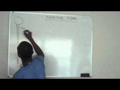 Brachial plexus made ridiculously simple PART 1-Lecture (skip to 2 minute mark, he doesn't start teaching until then)