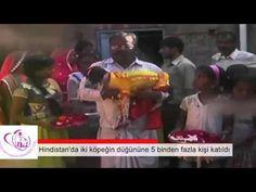 Hindistan'da damat ve gelinin köpek olduğu düğüne 5 binden fazla kişi katıldı. | Hayvan Sever Haber
