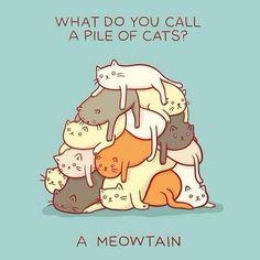 Science Cat (@DrScienceCat)   Twitter