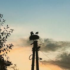 #stork family in sunset