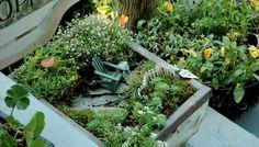 Fairy garden box with its tiny Adirondack.