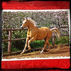 2013-07-04 #Postcard from #CzechRepublic (CZ-305285) via #postcrossing #horse #Padgram