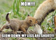 Funny Animal Pictures Of The Day 28 Pics