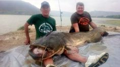 Monster six-foot long catfish caught by British father and son in Spain :http://www.theolivepress.es/spain-news/2016/10/27/monster-six-foot-long-catfish-caught-by-british-father-and-son-in-spain/