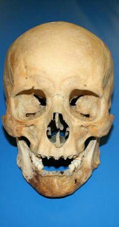 House Of Stuart, Tudor Monarchs, Skull Reference, Tudor Dynasty, Tudor Era, King Henry Viii, Skull And Bones, Memento Mori, Historical Fiction