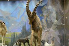 #Travel #tour #Darwin #Museum (10)