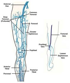 Lower Extremity Veins