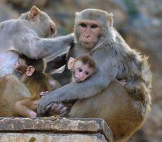 Monkey Business by Dayla de Knegt - Photo 125077399 - 500px