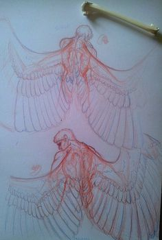 """the-tabularium: """" Garuda Anatomy Studies My tablet is offline for a few days whilst I get a new connecting cable for it, so I'm doing traditional studies. Today's subject: redoing how and where the Garuda gent's wings attach. Whilst it looks, from..."""