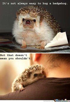 it's not always easy to hug a hedgehog