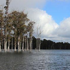 Flooded Lake King William. #tasmania #lakekingwilliam #discovertasmania Image Credit: longroadtolondon