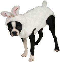 Bunny Pet Costume: X-Large