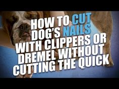 Grooming dogs can be tricky, but with this extensive FREE dog grooming course online, you'll quickly learn how to groom a dog at home safely and with ease.
