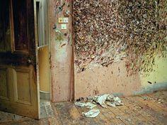 Lucien Freud Studio, Mary McCartney