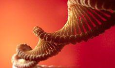 Η αποθήκευση δεδομένων στο DNA θα μπορούσε να διαρκέσει χιλιάδες χρόνια | The curiosity of Cat